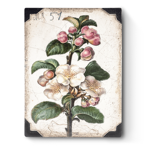 Sid Dickens - Apple Blossom - T462 (Retiring)