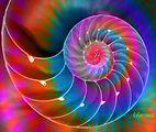 rainbow nautilus2.jpg