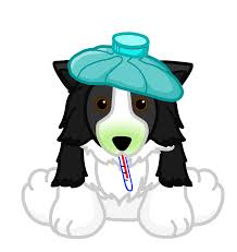 Genetic Diseases in Border Collies