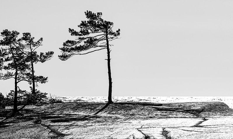 Foto:Niklas Montonen