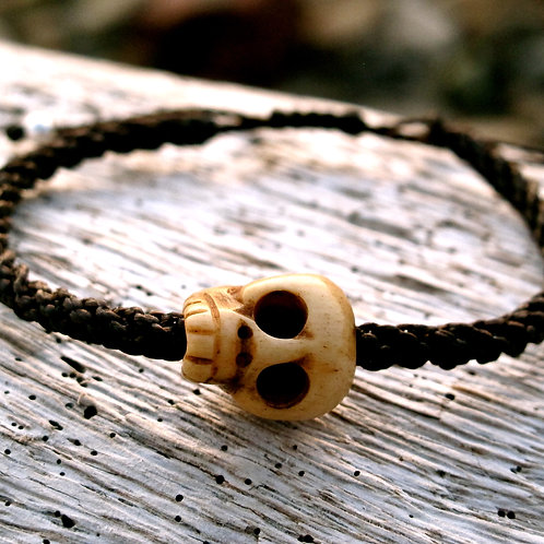 One skull animal Bone Brown