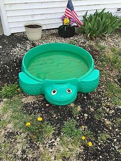 Turtle woLid.jpg