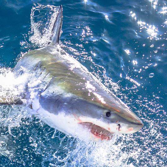 Fun Shark!
