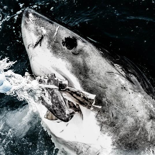 I Want My Tuna