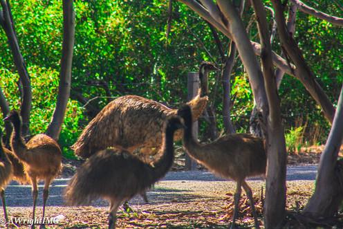 Emu Group
