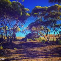 Desert Path