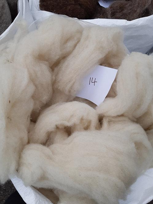 14 - 200g Pure British Natural White Shetland Sliver.