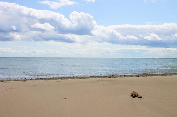Beach_Willow3.jpg