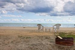 Beach_Willow2