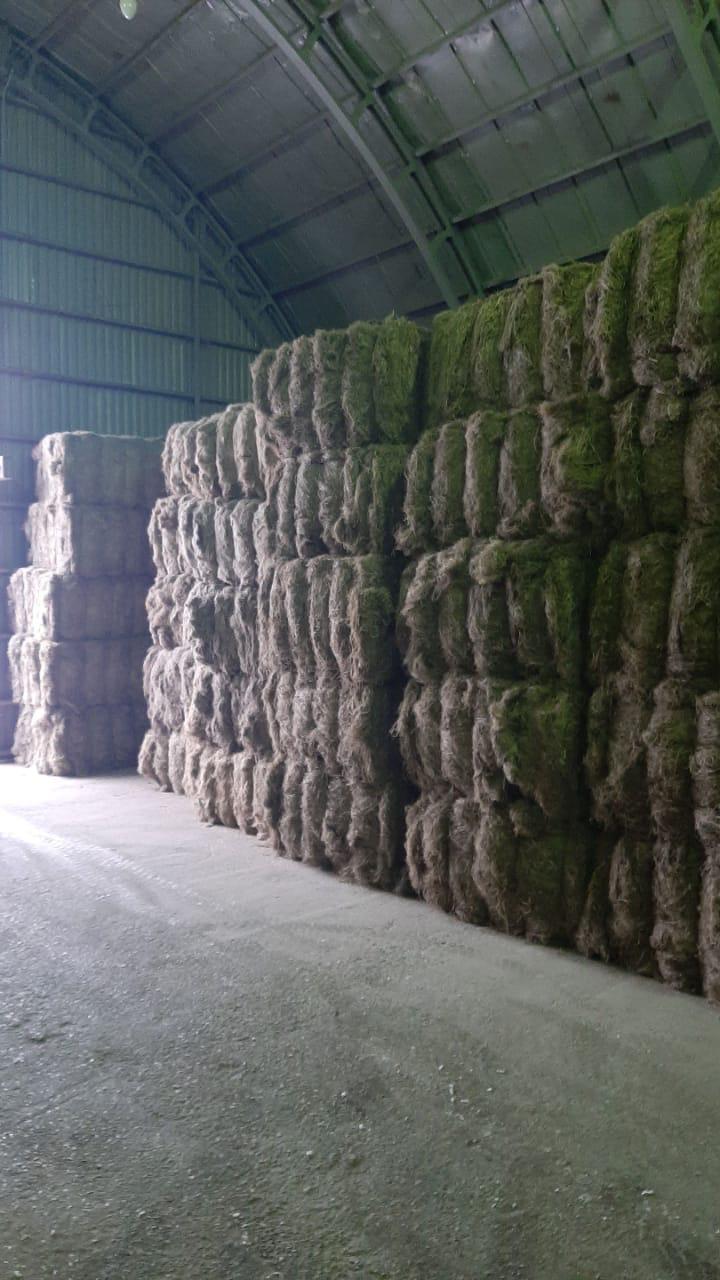 Flax fiber2
