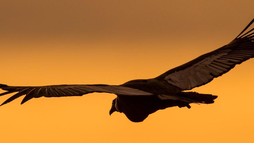 sunset flight with the Big Bird