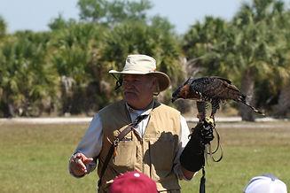 Steve Hoddy - Ornate Hawk-Eagle.JPG