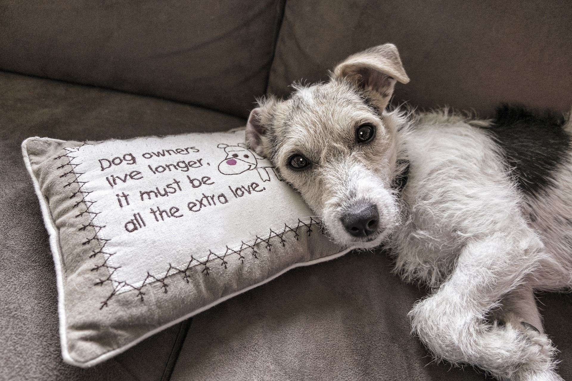 Pros and Cons of Pets in Rental Properties | Orchard K Lettings ...