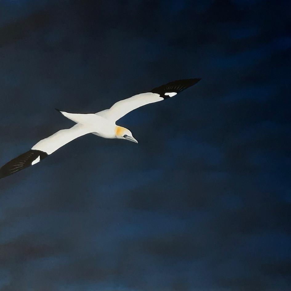 Soar VI Ocean glider.jpeg