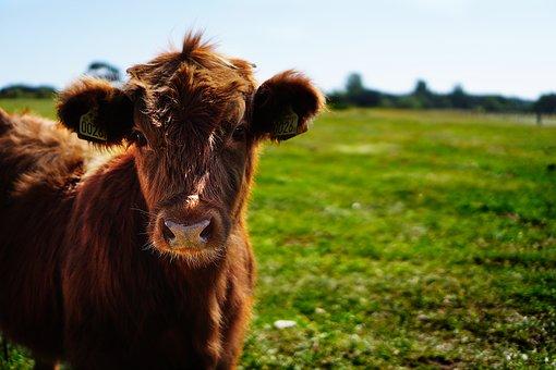 bull-1596629__340