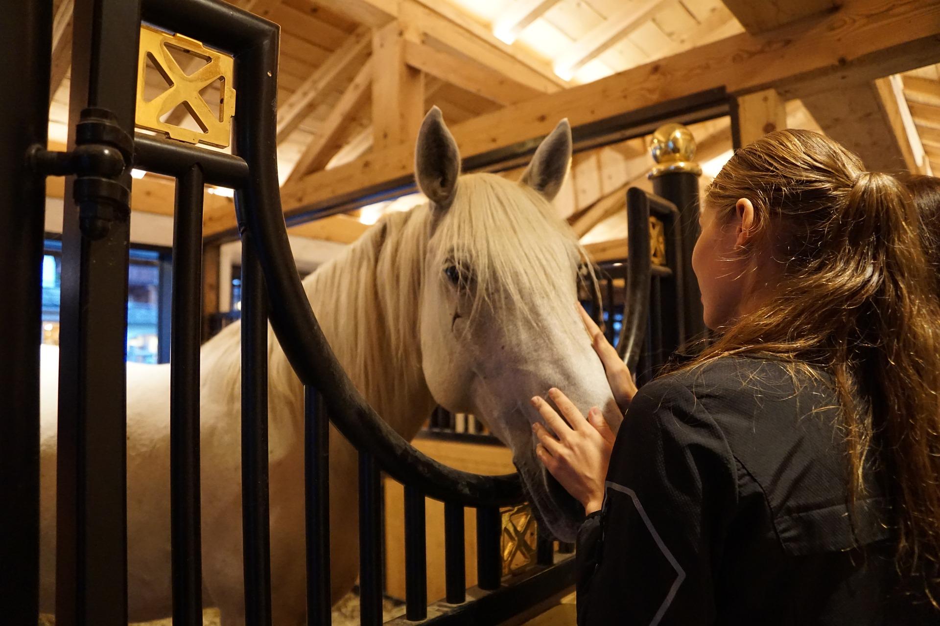 filière équine cheval