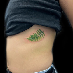Colour tattoo Fern