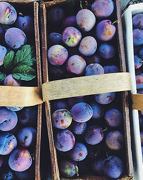 fresh picked purple plums,_come by Quiet