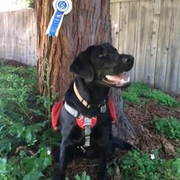 Trainer Jean Cary, Service Dog Tutor