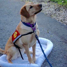 Types of Working Dogs and Access
