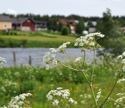 Osuuskunta Sompion Tähti toimii Sodankylässä ja sivukylissä
