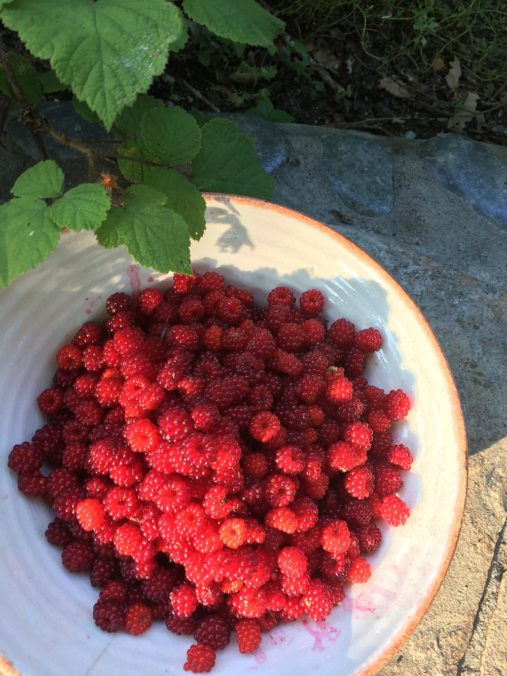 Raspberries in the sun