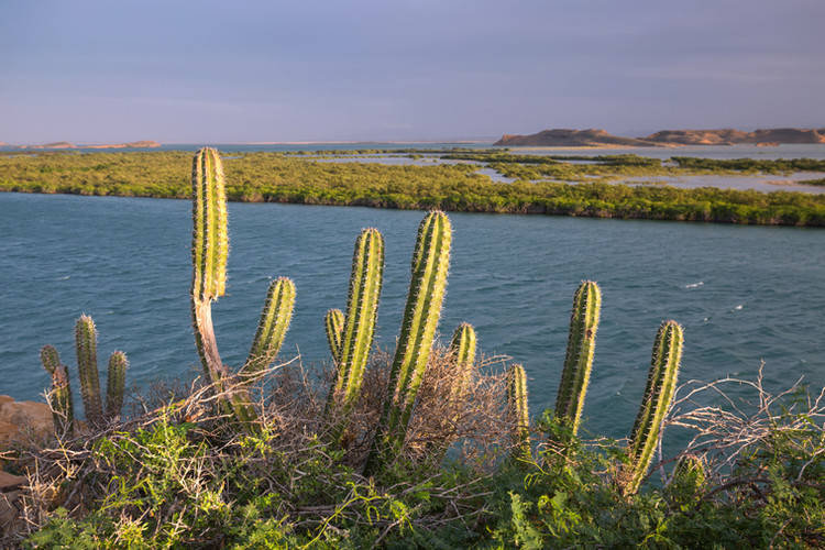Bahia Hondita Cactus.jpeg
