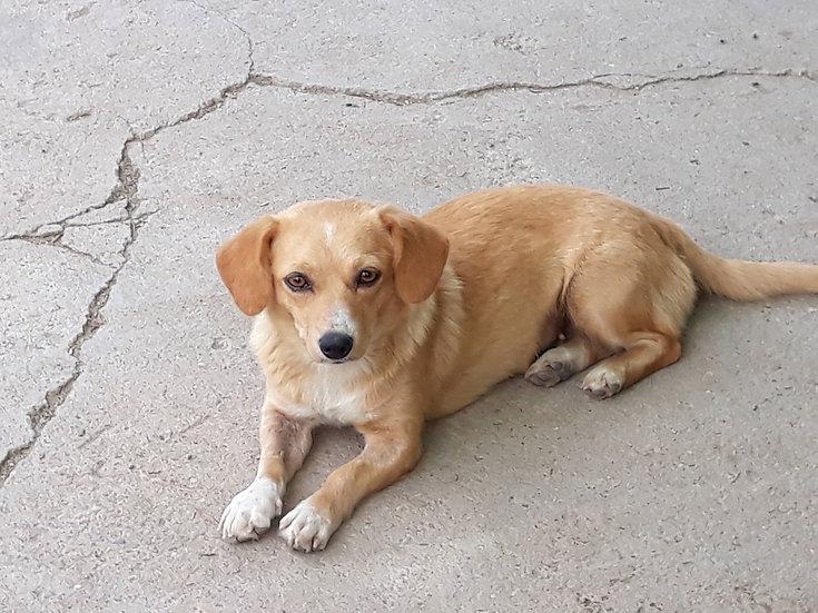 Layla, 2 years, small girl