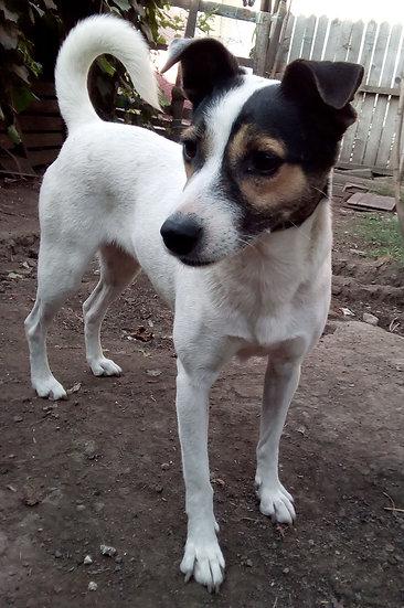 Penny, born 2015