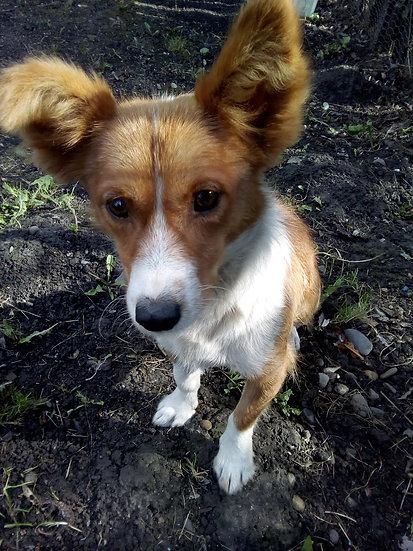 Rusty, 1 year, small