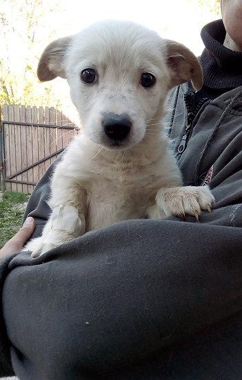 Sid, male, born August