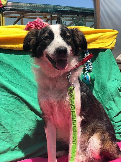 Marley, 4 years