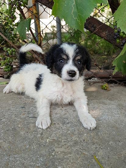 Sophie, female, born June