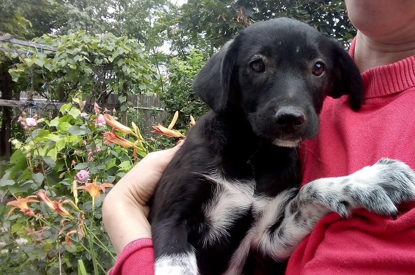 Pia, female, born April
