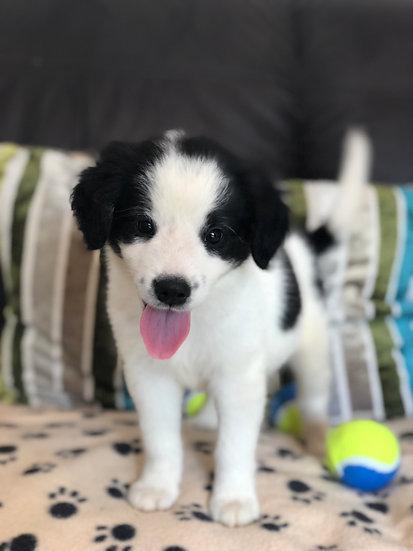 Marvin, male, born June