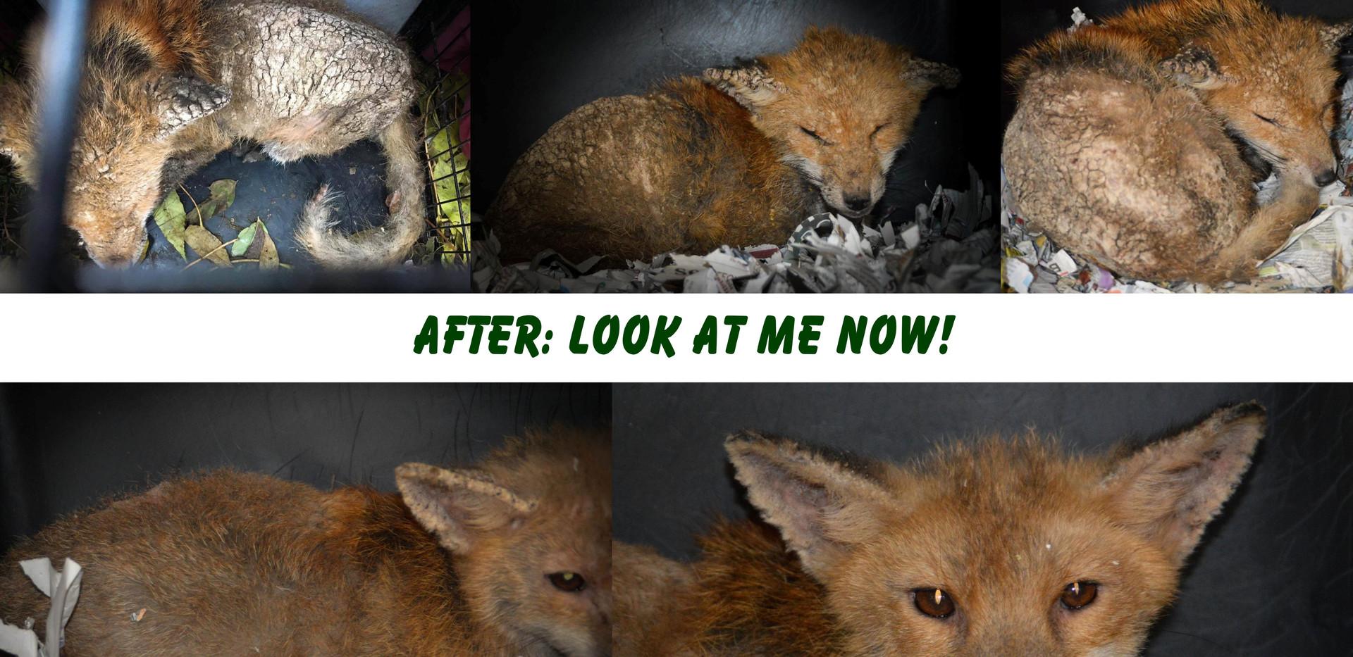 Molly-the-fox.jpg
