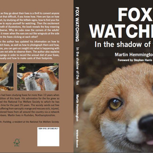 Fox Watching In The Shadow Of The Fox