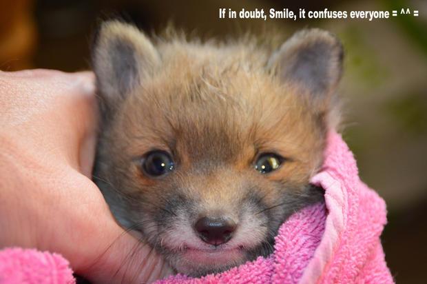 smile.jpg