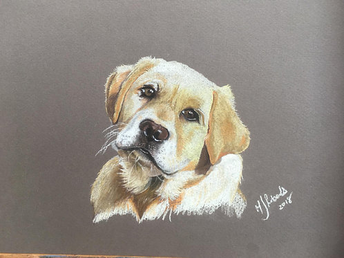 HONEY LABRADOR