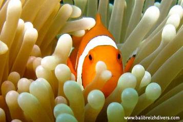 Bali underwater life