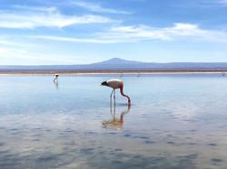 Los flamencos, Atacama - Chile