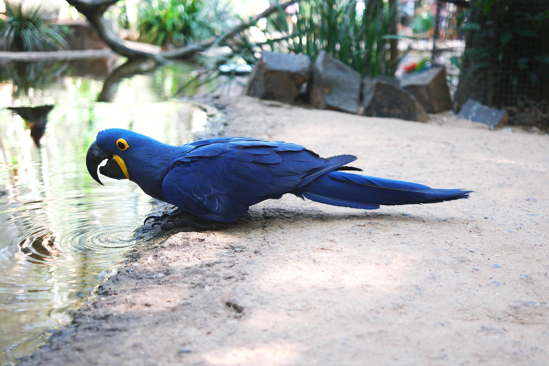 Iguaçu - Brasil