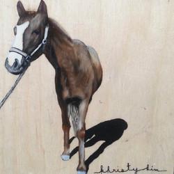 Hawaiin Horse 2014