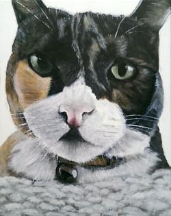 Kitty 2015