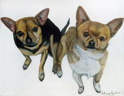 Kowal Pups 2016