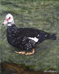 Alison's Duck 2016