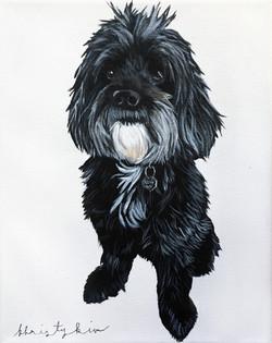 Emily's Puppy 2017