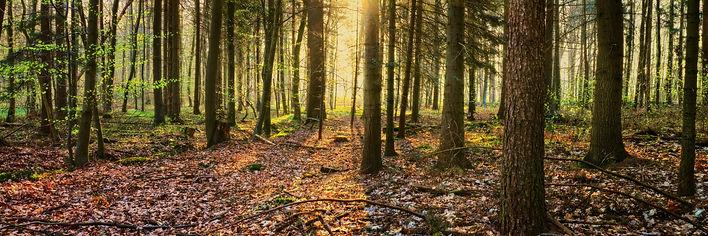 Wald Borstelhohenraden_3x1.jpg