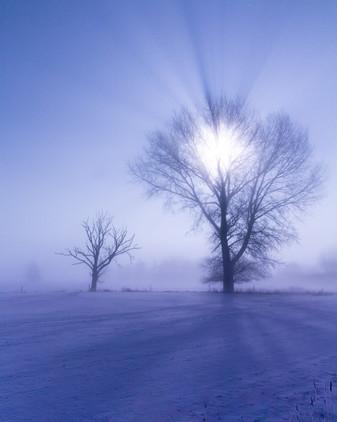 30-01-2021-Nebelmondwinter (1 von 1)-2.j