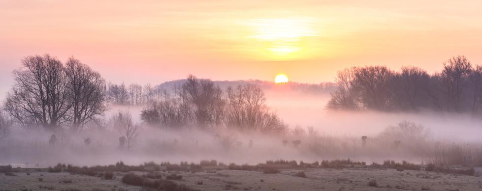 Sonnenaufgang am Elbdeich